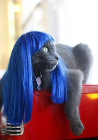 Kitty_wigs_blue
