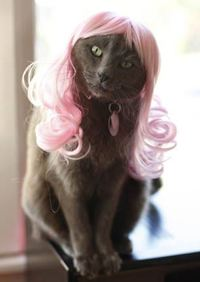 Pink_kitty_wigs_5